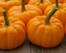 Pumpkin; Kürbis