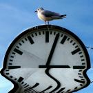 Möve auf Uhr sitzend, welche sich im Wasser spiegelt